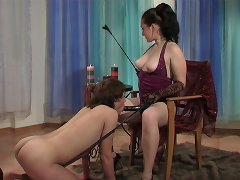 Obedient puppy serves his mistress